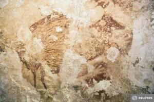 picturi sulawesi
