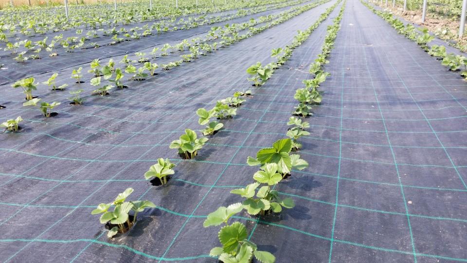 De ce avem nevoie de folia agrotextil?