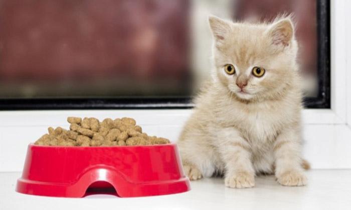 Alegerea celui mai bun aliment pentru animale de companie pentru sanatatea pisicii tale